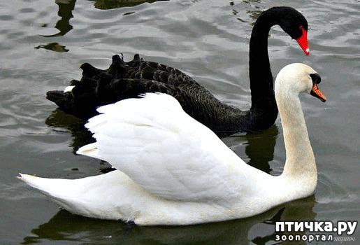 фото 9: Фотографии милых животных