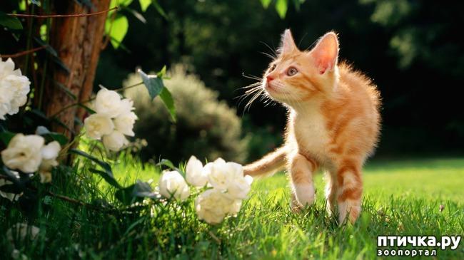 фото 20: Фотографии милых животных