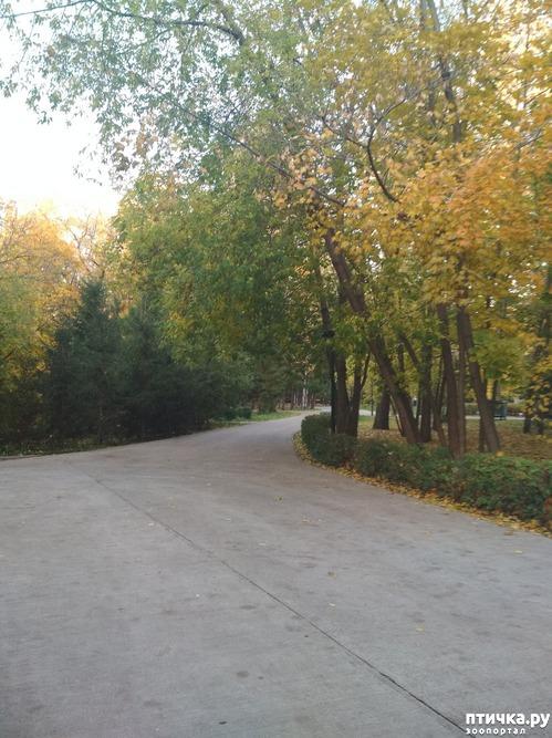 фото 1: Беличий беспредел в парке Горького