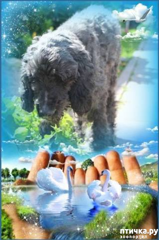 Открытки скорби по собаке