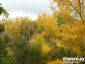 фото: Осень в разгаре... Стихотворная тема