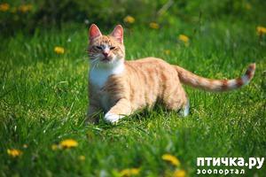 фото: Какую траву прорастить для кошки?