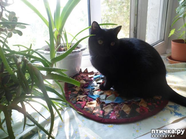 фото 1: За что я люблю свою кошку)))
