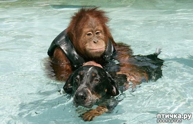 фото 1: 20 примеров того, что ничто человеческое животным не чуждо