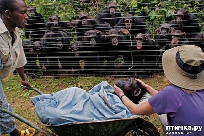 фото 15: 20 примеров того, что ничто человеческое животным не чуждо