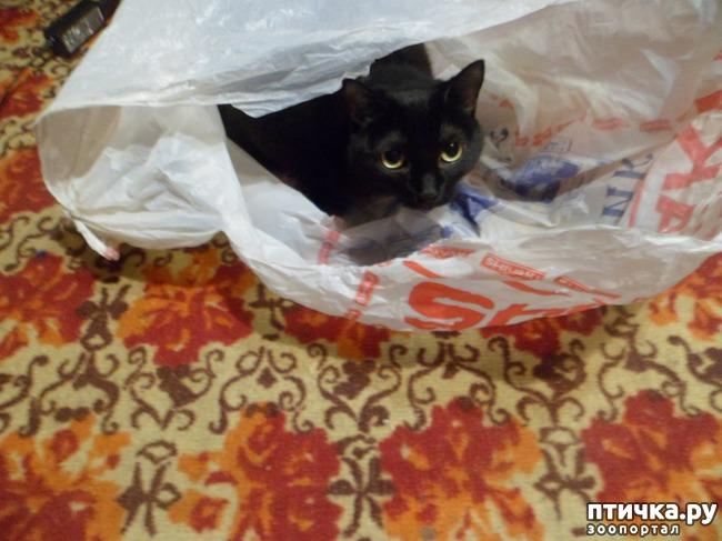 фото 5: За что я люблю свою кошку)))