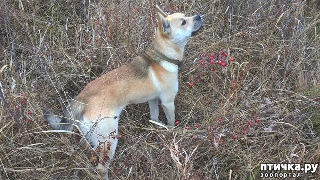 фото 1: Почему собака проявляет агрессию к людям на прогулке