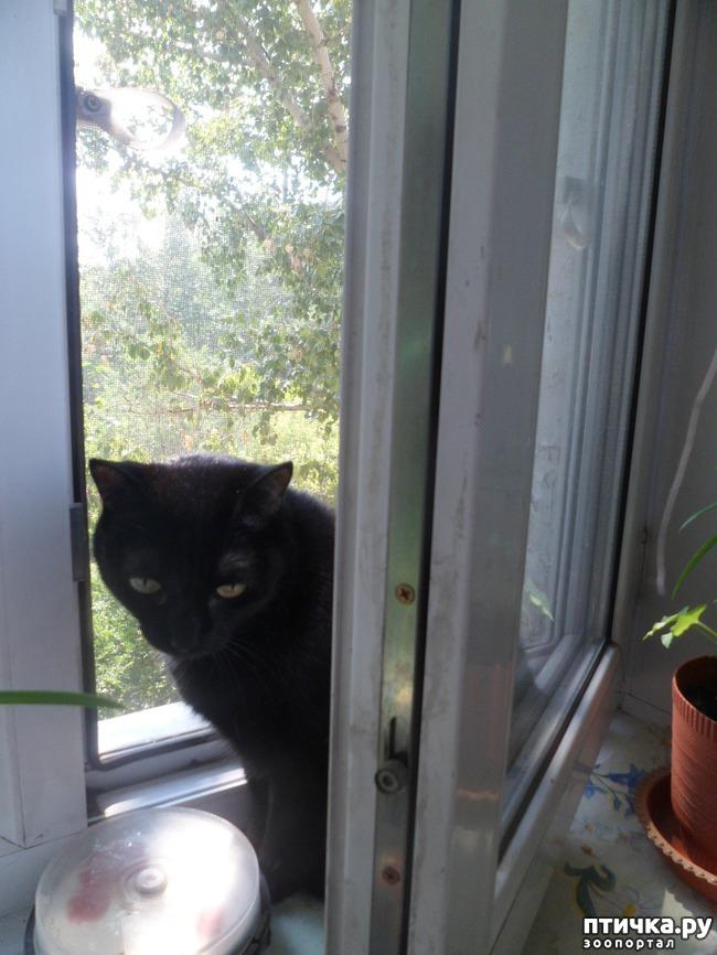 фото 6: За что я люблю свою кошку)))