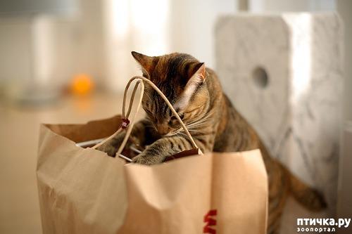 фото 8: За что я люблю свою кошку)))