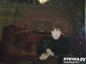 фото: Русский спаниель Дуся. Команда Ищи!