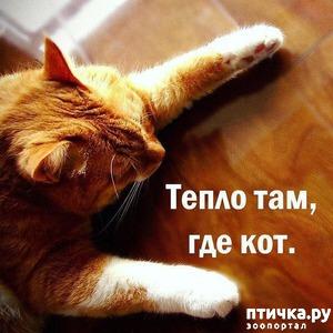 фото: Котоматрица: Теплые коты!