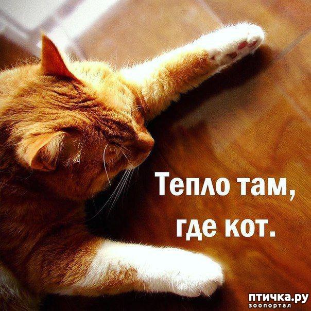 фото 1: Котоматрица: Теплые коты!