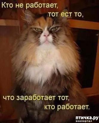 фото 3: Котоматрица: Теплые коты!