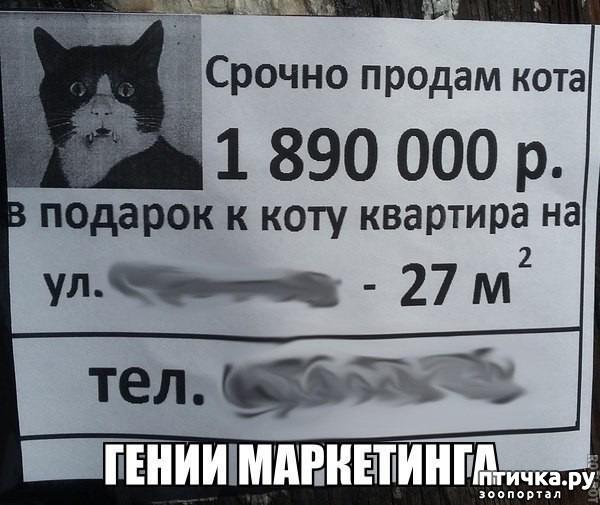 фото 5: Котоматрица: Теплые коты!