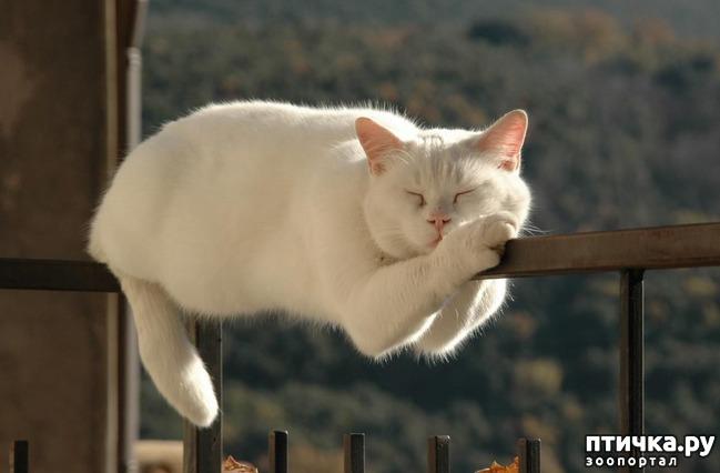 фото 6: Котоматрица: Теплые коты!