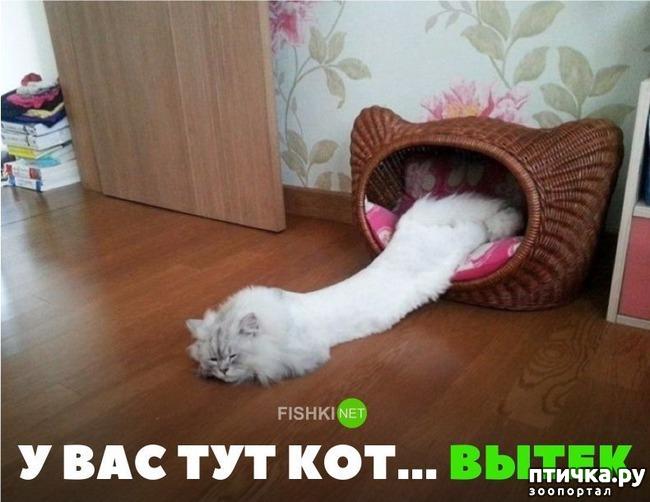 фото 7: Котоматрица: Теплые коты!