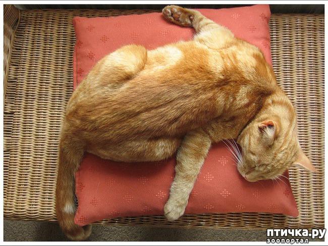 фото 8: Котоматрица: Теплые коты!