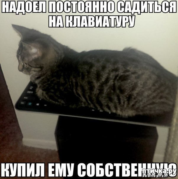фото 11: Котоматрица: Теплые коты!