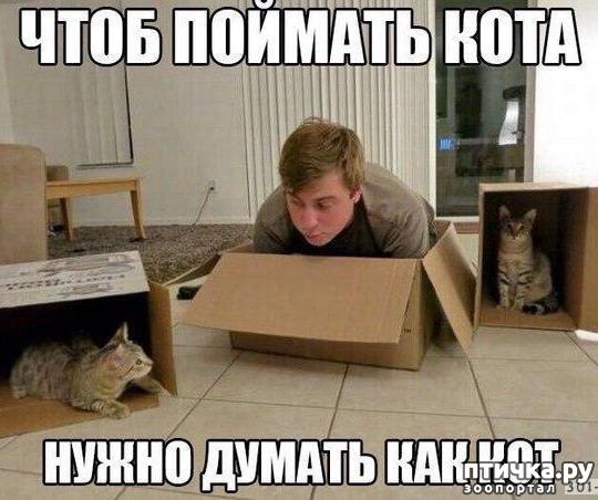 фото 12: Котоматрица: Теплые коты!
