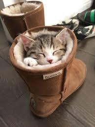фото 13: Котоматрица: Теплые коты!