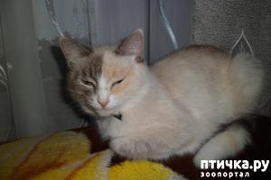 фото: Взрослая кошка стала гадить. Почему и что делать?