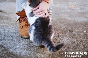 фото: Вот это забота о животных!