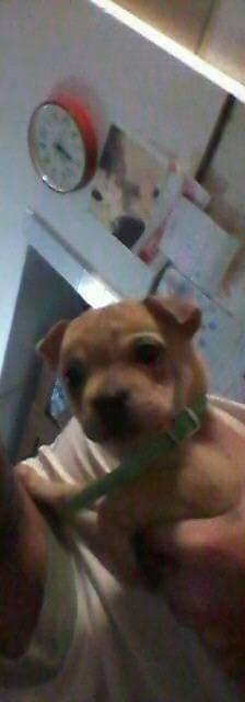 фото: Подскажите пожалуйста. С кем можно сделать вязку??? Когда собака метис: шарпей и лабрадор?