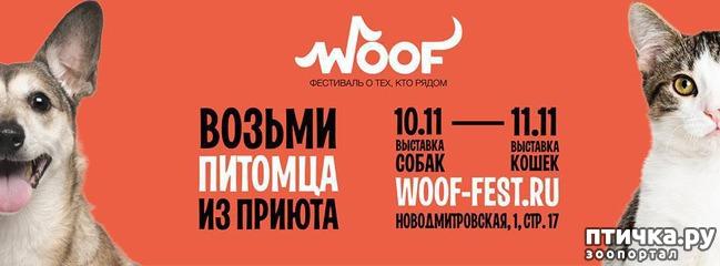 фото 1: Фестиваль в Москве
