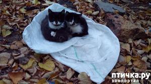 фото: Очередные бездомные котята