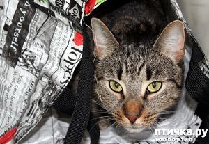 фото: Переноски для кошек. Какой отдать предпочтение?