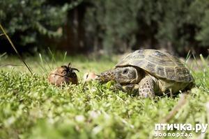 фото: Спячка среднеазиатской черепахи