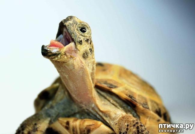 фото 3: Спячка среднеазиатской черепахи