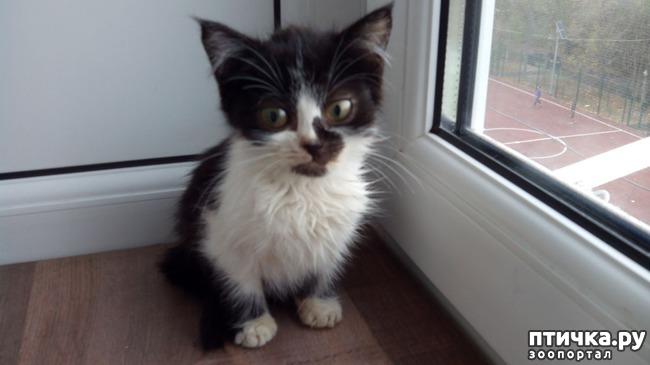 фото 4: Глисты у кошек