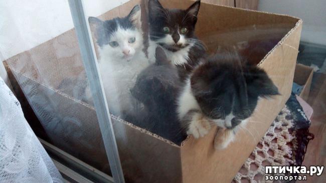 фото 7: Глисты у кошек