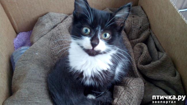 фото 6: Глисты у кошек