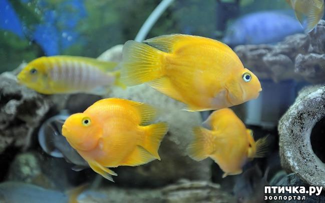 фото 4: Рыбы попугаи.