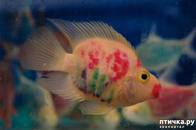 фото 6: Рыбы попугаи.