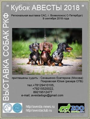 фото: Региональная выставка собак РКФ - 9 сентября 2018г. Санкт Петербург