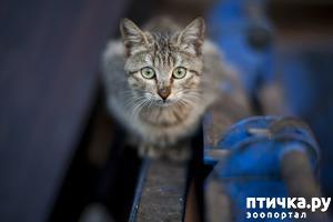 фото: Как гулять городской кошке?
