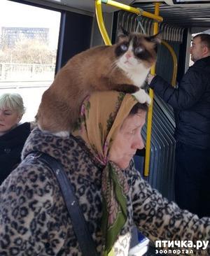 фото: Однажды в автобусе