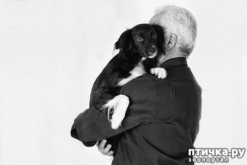 фото 2: Зачем нужны домашние животные?