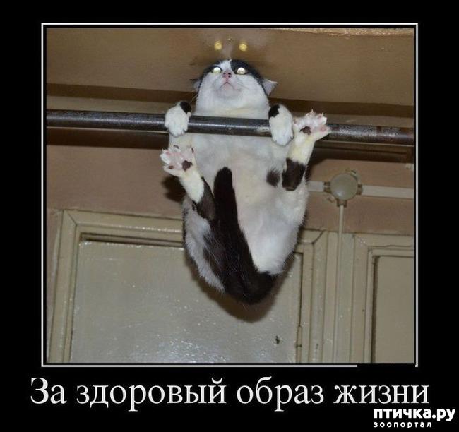 фото 2: Котоматрица: Будьте здоровы!!!