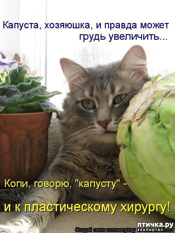 фото 8: Котоматрица: Будьте здоровы!!!