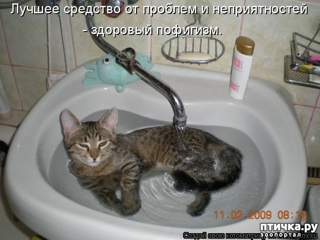 фото 9: Котоматрица: Будьте здоровы!!!
