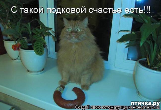 фото 11: Котоматрица: Будьте здоровы!!!