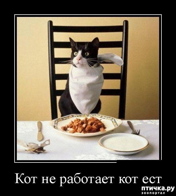 фото 13: Котоматрица: Будьте здоровы!!!