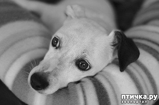 фото 1: Зачем нужны домашние животные?