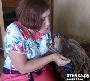 фото: Поцелуй с медведем