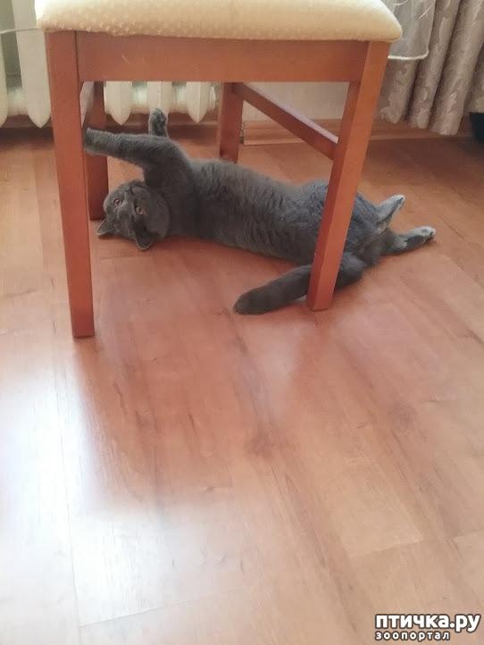 фото 4: Долог ли кошачий век?