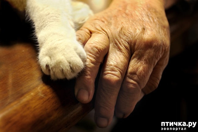 фото 1: Долог ли кошачий век?